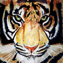 Eye Of The Tiger by laura seed