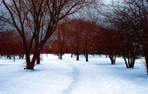 Winter Artistry von Milena Ilieva