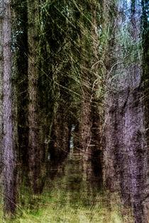 Into the magical woodland von royspics
