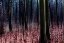 Enchanted Forest von royspics
