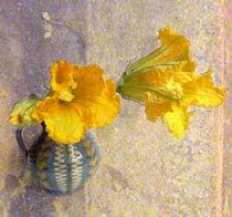 Kürbisblüten von Kerstin Runge