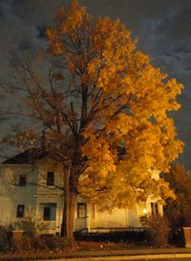 Burning Leaves At Night von Guy  Ricketts