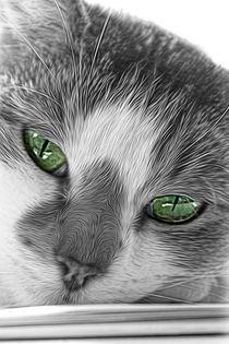 Felines. by rosanna zavanaiu