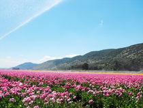 flower field by tomer kupilavitz