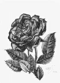 Rose by zeichenkraft