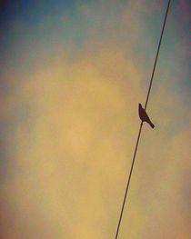 My Bird on A Wire by mik-goben