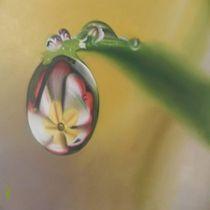 Daisy Dew reflection by mik-goben