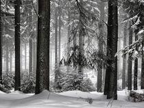 Das Geheimnis des Waldes by artbeg