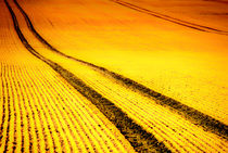 'Field' by fraenks