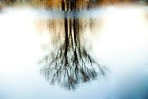 Winter Tree  von fraenks