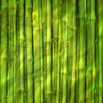 Bamboo Dream by Lutz Baar