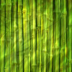 Bamboo-dream