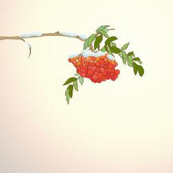 Rowan-background