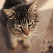 Cat. von Ekaterina Planina