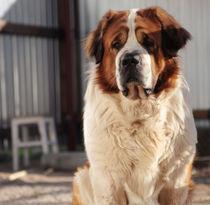 Dog. by Ekaterina Planina