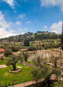 Garden-in-jerusalem