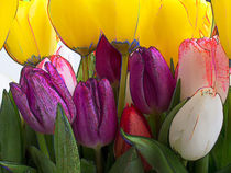 tulips by Leandro Bistolfi
