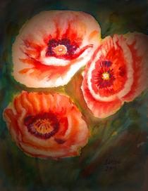 Türkische Mohnblumen von Irina Usova