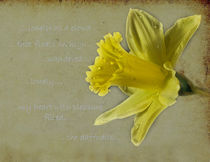 Yellow Daffodil by Jacqi Elmslie