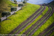 rolling hills by dayle ann  clavin