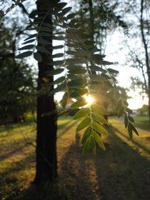 Wiener Wald von Lucia Benzova