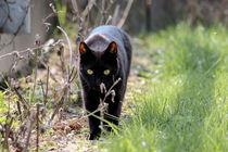 Little Panther von melanie-mp