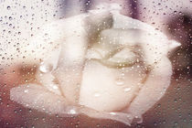 Softly in the Rain von Judy Hall-Folde
