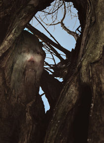 Dem Baum ein Gesicht geben  by Barbara  Keichel