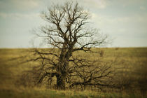 lonely tree von evgeny bashta