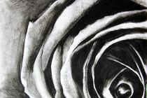 Charcoal rose von krisssxc
