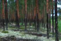 »Skogen« - schwedischer Wald von Peter Bergmann