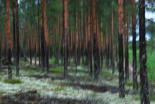 Skogen-wald-schweden