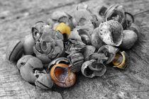 Schneckenfriedhof - snails cemetery von ropo13