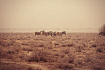 Etosha Zebras VII by Marcus Kaspar