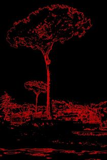 Tree in Rome by Brigitta Frisch