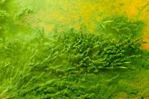Underwater plants by Volodymyr Chaban