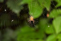 Spider on a web by Volodymyr Chaban