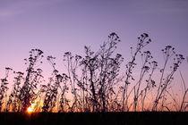 Sunset von Volodymyr Chaban
