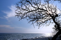 Dried tree on the sea by Volodymyr Chaban