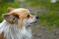 Dog outdoors von Volodymyr Chaban