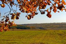 Autumn landscape by Volodymyr Chaban