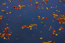 Beautiful Fading I von Denis Jung