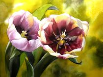tulips in the light by alfred ng