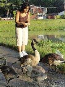 Mother Goose von Guy  Ricketts