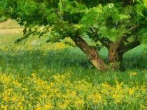 Wiese mit gelben Blumen und grünem Gras im Frühling von Matthias Hauser