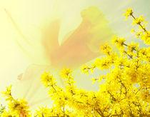 Frühling by Maria-Anna  Ziehr