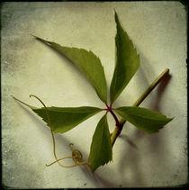Herbaliser No. 37 by Daniela Weber