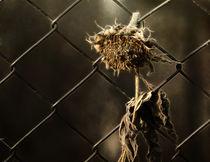 sadness by Franziska Rullert