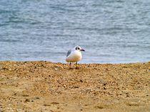 Strandleben I von juliane-brueggemann