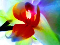 Orchidee Friedenstaube von edelart